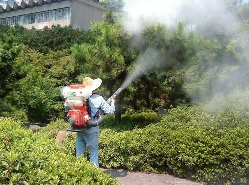 从化城郊街道旺城东社区园林绿化养护