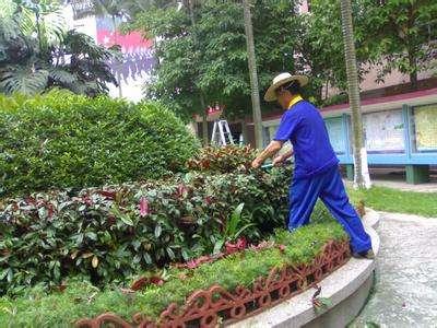 从化江埔街道吉星社区园林绿化