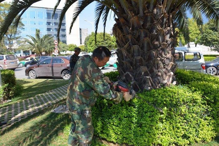 花都区新民社区园林绿化养护