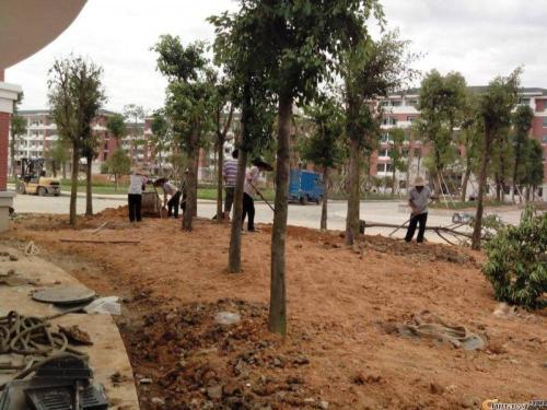 从化城郊街道学校园林绿化养护